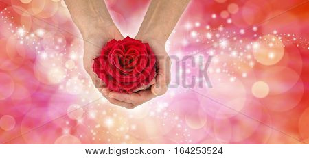 Happy Valentine's Day Red Rose Banner - Female holding a Valentine's Day Symbolic Red Rose with a Heart Shaped Center on a sparkling pink red bokeh wide background with copy space