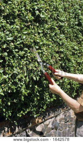 Cutting The Hedge