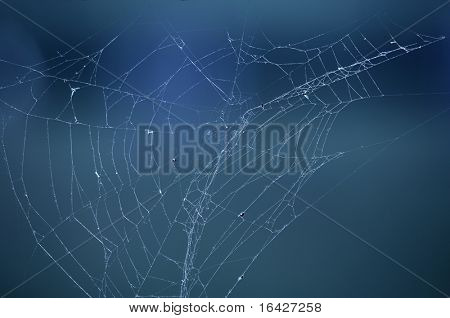 Spider web (cobweb) with drops of morning dew.