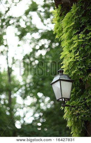Lantern on a fresh green background