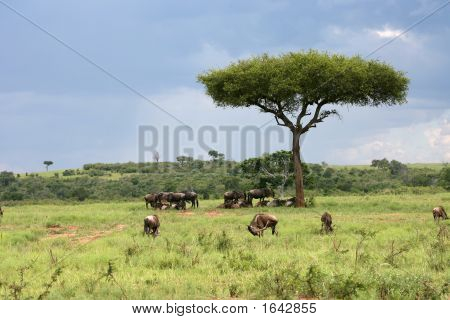 Afrikanische Landschaft mit Gnus
