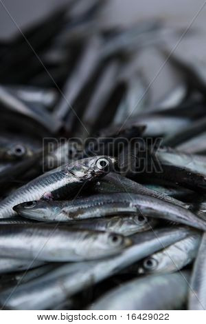 Fresh Anchovy / Sardines