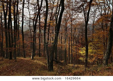 Autumn/Fall forest - works great a natural background for misc. applications