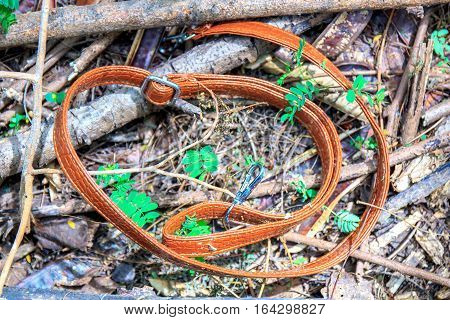 Unknown woman belt found in the forest.