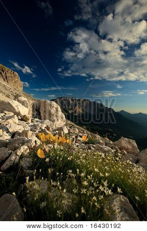 Beautiful alpine scenery (Dolomites, Italy) - tiny yellow flowers in the foreground, dramatic sky, warm evening light make for the beauty of this image