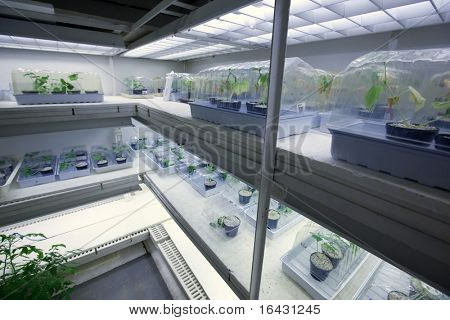 science concept - botany research center freezer with young plants being kept at a very low temperature