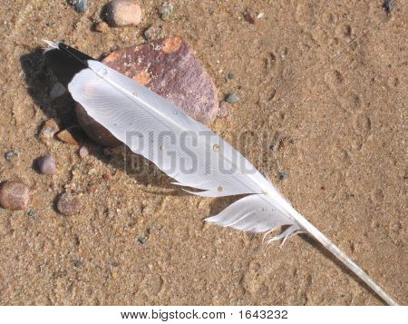 Feather On Damp Sand