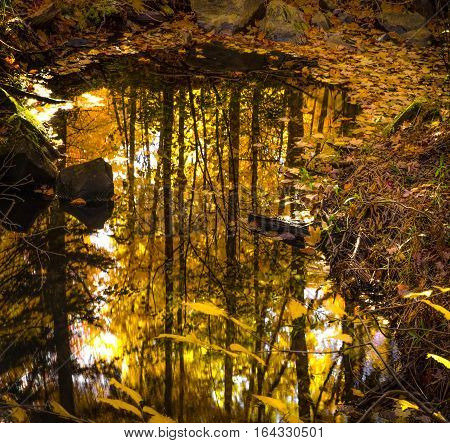 Michigan Autumn Forest Reflections. Autumn forest colors at peak foliage reflected in a small pond in a northern Michigan forest.