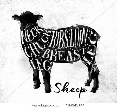 Poster sheep lamb cutting scheme lettering neck chuck ribs breast loin leg in vintage style drawing on dirty paper background