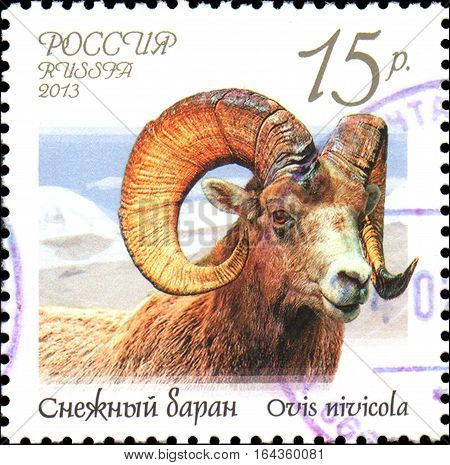 RUSSIA - CIRCA 2013: Postage stamp printed in Russia shows snow sheep (Ovis nivicola), series Fauna of Russia. Wild goats and rams