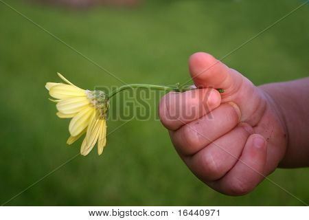 toddler's hand holding flower
