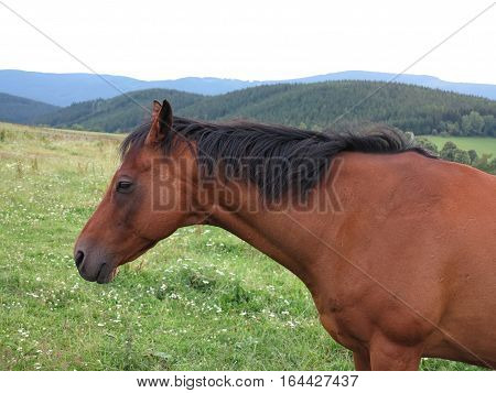 Shot of the brown horse on pasture