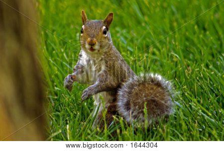 A Surprised Squirrel