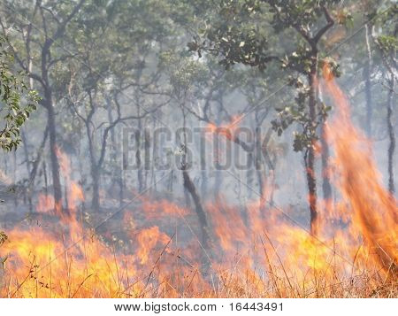 Bushfire - focus on burning grass in foreground