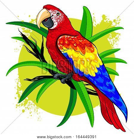 vector illustration of bright colorful bird red parrot with yellow and blue wings on a light green background adorned with green leaves