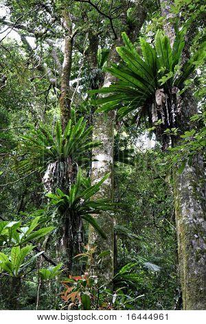Rainforest - Lamington National Park