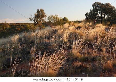 Outback landscape - Kings Canyon, NT Australia
