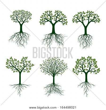 Set Green Trees with Roots. Vector Illustration and graphic element.