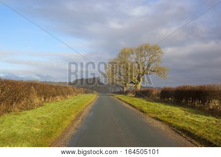 Winter Oaks And Haighway