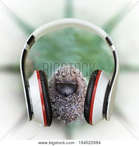 Young hedgehog in headphones listening to music. Be yourselves. Contemporary music and youth. Relax with our time. Meditation. Search yourself. Loneliness.