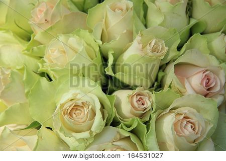 Pale pink roses in a bridal arrangement