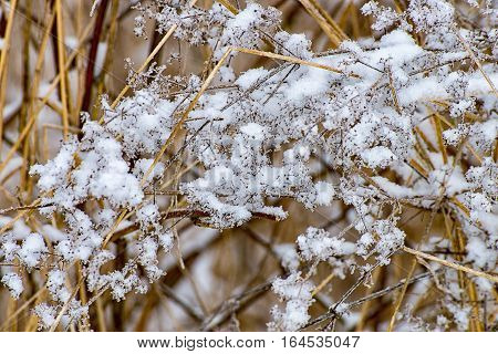 Icy meadow in the winter at the village