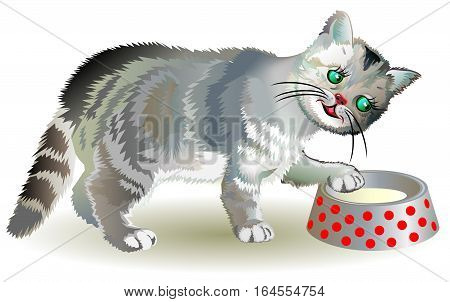 Illustration of curious gray kitten looking for food in a bowl, vector cartoon image.
