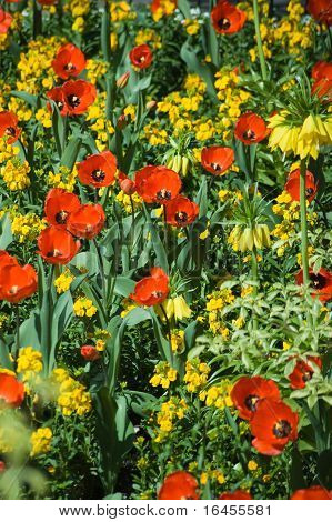 Red and Yellow flower bed