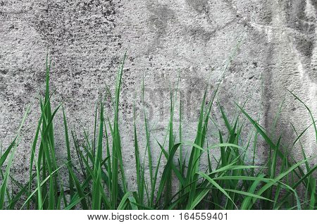Dark Grey Coarse Concrete Stone Wall Texture Green Grass Horizontal Macro Closeup Old Aged Weathered Natural Gray Rustic Textured Grungy Stonewall Background Pattern Blank Empty Grunge Copy Space