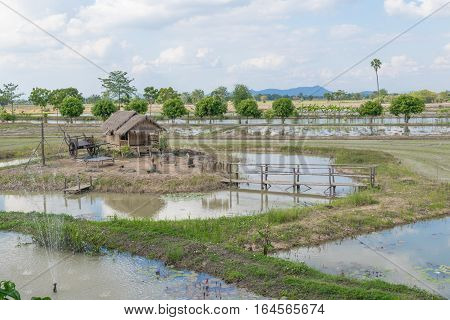 Outdoor Countryside Meadow Grass Nature. Background Photography Of Countryside, Natural Landscape. A