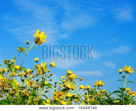Colorful autumn flowers in blue sky
