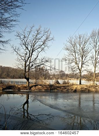 Partially icebounded pond wih trees reflected on water ground in CHKO Poodri near Ostrava city during winter day with clear sky