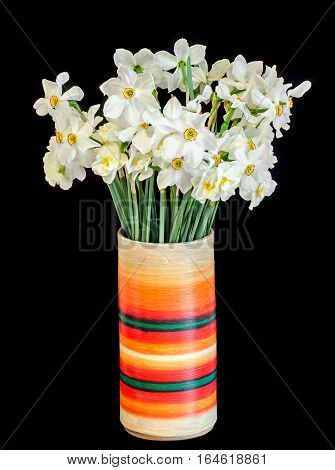 White Daffodils Flowers, Narcissus, Multi Colored Vase, Flowerpot, Close Up, Black Background.