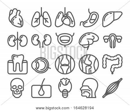 Set of vector Medical Icons with human organs in line style