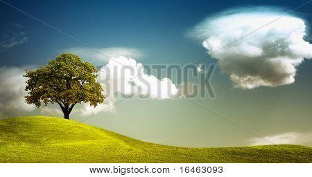 Tree on field panorama