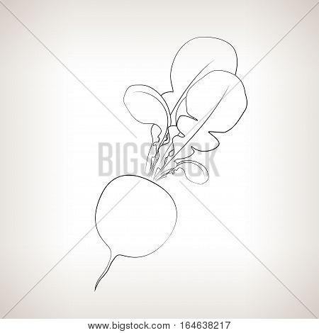 Radish, Image Radish in the Contours on a Light Background, Black and White Illustration