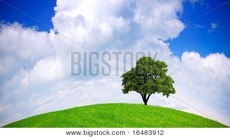 Ecologia global