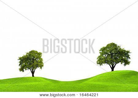 Robles en campo verde, aislado sobre fondo blanco