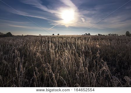 Morning the first autumn frosts. Forest-steppe zone Kolyvan district Novosibirsk oblast Siberia Russia