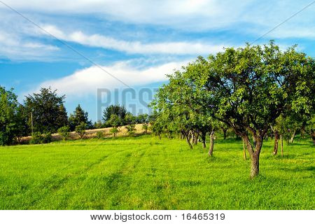 Apple orchard on blue sky