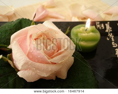 Pink rose and green candle for spa