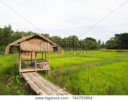 Cottage with walk way in the rice field