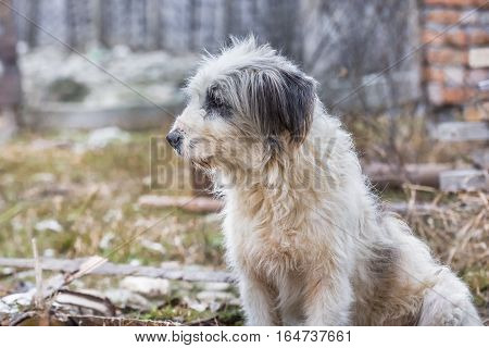 Profile of cute fluffy dog of mixed breed looking to the side
