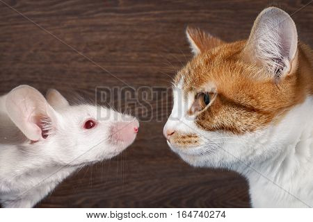 Cat and mouse. The animal profiles muzzle closeup