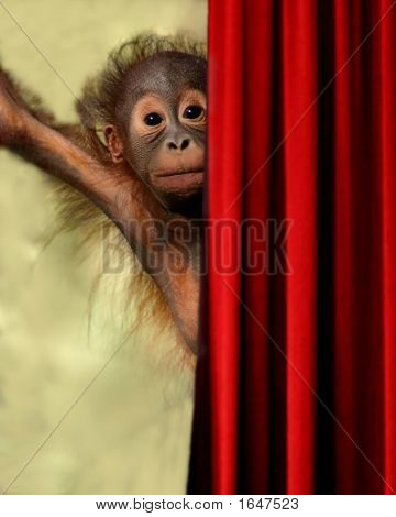 auf der Bühne-Orang-Utan