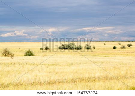 Yellow grass in the steppe and blue sky.