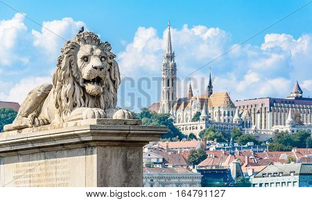 Lion statue on the Chain Bridge in Budapest. View on Fisherman's Bastion and Matthias Church. Danube river. Hungary.