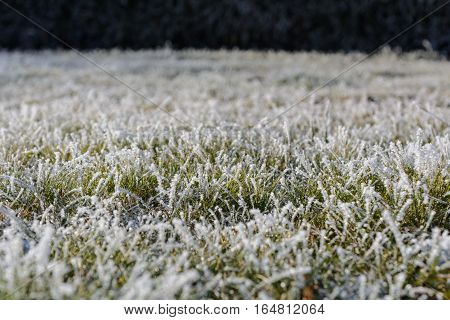 Rime and ice crystals on grass blades in the garden - depth of field