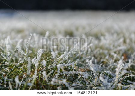 Hoarfrost and ice crystals on lush green blades of grass - depth of field