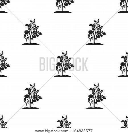 Tomato icon in black style isolated on white background. Plant pattern stock vector illustration.